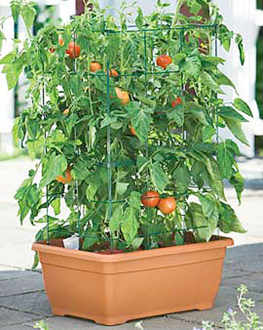 Terrace Gardening How Do You Look At It Gardening Forums